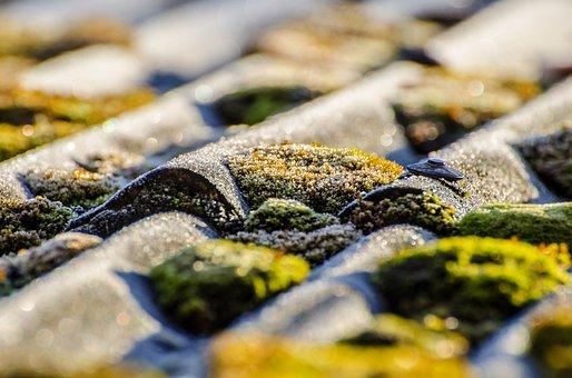 Moss, Surface, Outdoor, Soil, Lichen, Soft, Natural