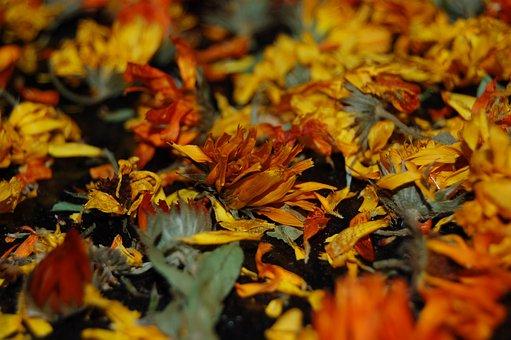Flowers, Dried Flowers, Herbarium, Yellow, Red, Petal