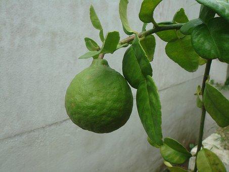 Lime, Citrus, Fruit, Healthy, Juicy, Natural, Sour