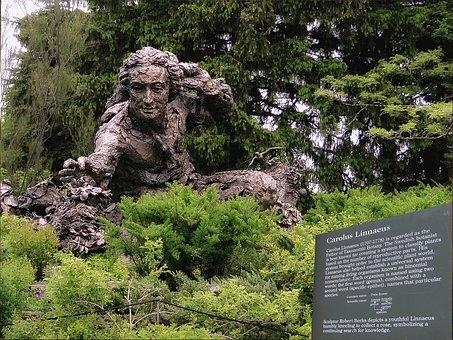 Monument, Character, The Statue Of, Carolus Linnaeus
