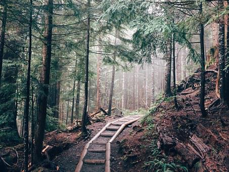 Hiking, Forest, Wood, Path, Trail, Trees, Nature