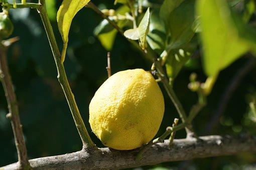 Lemon, Citrus, Tree, Citrus Fruits, Mediterranean