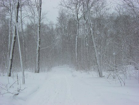 Snow, Snowstorm, Winter, Trail, Forest, Snowfall