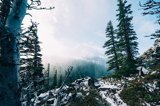 Mountains, Hiking, Misty, Foggy, Trees, Snow, Winter