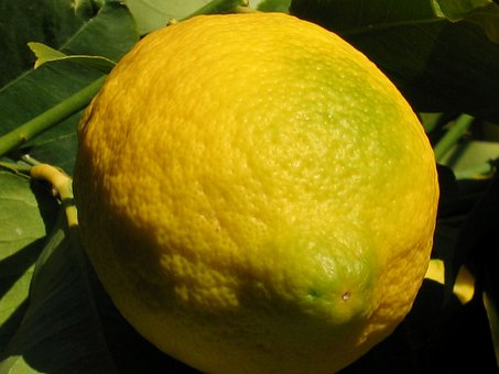 Lemon, Fruit, Citrus, Yellow, Tree, Nature, Macro