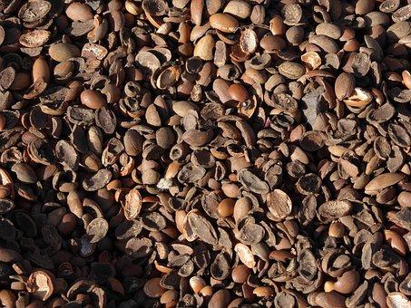 Argan Oil, Nutshells, Argan Nuts, Morocco, Bioargan