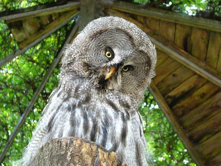 Bart Owl, Weird Bird, Animal World, Funny