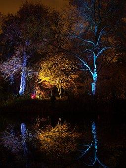 England, Great Britain, Syon Park, Enchanted, Woodland