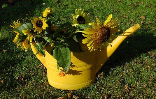 Sunflower, Watering Can, Faded, Autumn, Garden