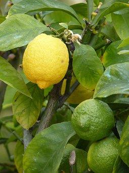 Lemon, Yellow, Green, Sour, Fruit, Vitamins, Fruits