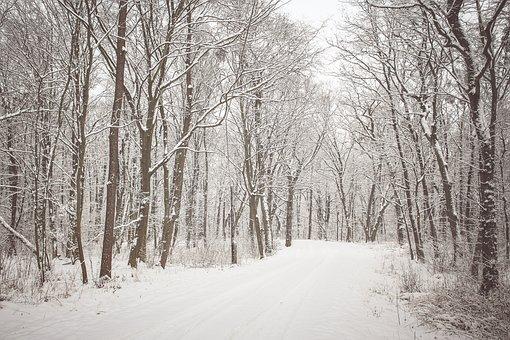 Wild, Forest, Snow, Wilderness, Trees, Alpine, Slope