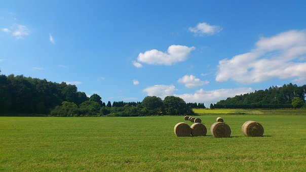 Straw Bales, Agriculture, Hay, Hay Bales, Summer