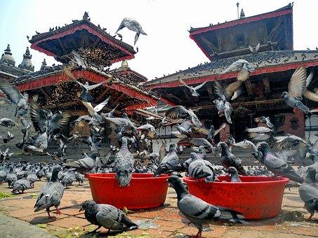 Kathmandu, Nepal, Birds, Pigeons, Temple, Architecture