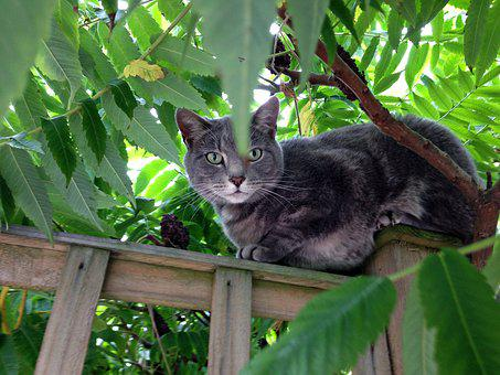 Cat, Tree, Green, Bush, Animal, Predator, Meow