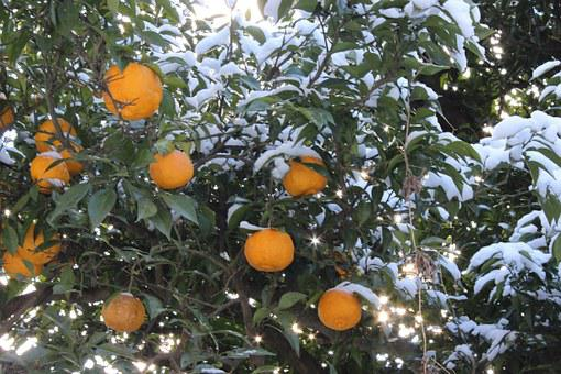 Mount Shinobu, Citron, Fukushima, Snow, Orange