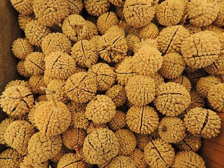 Button Nut, Vacuum Sleeve, Dried, Nut, Seeds