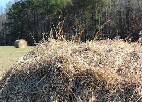Hay Pile, Fodder, Dried Grass, Hay Field, Farm
