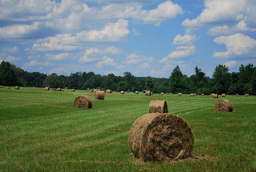 Field, Hay Bales, Sky, Hay, Agriculture, Bale, Nature