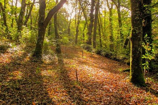 Spain, Galicia, Landscape, Forest, Fraga