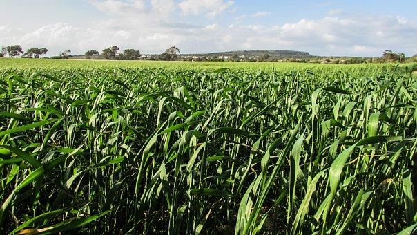 Grass Field, Green, Landscape, Rural, Cyprus