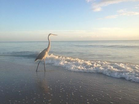 Heron, Beach, Sun And Sea, Florida, Bird