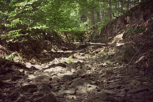 Forest, Riverbed, Stone, Nature, Landscape, Out, Old