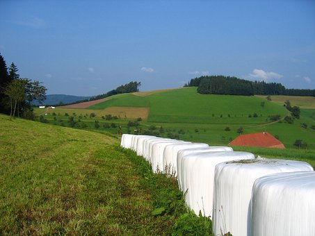Meadow, Hay, Straw, Black Forest, Germany, Hill