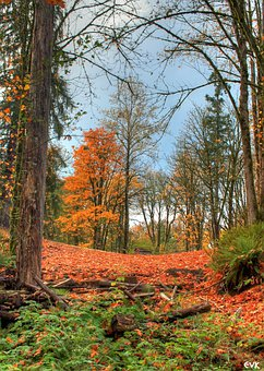 Orange, Autumn, Trees, Between, Shed, Hidden, Nature