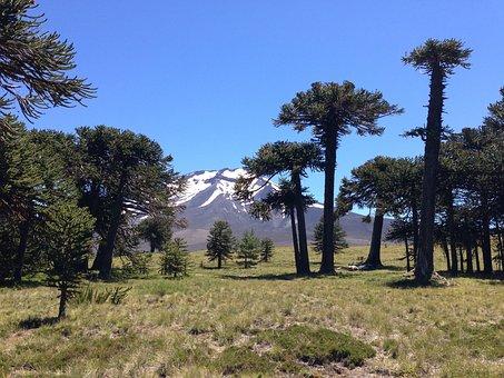 Parque Nacional, Los Araucarias, Chile Argentina