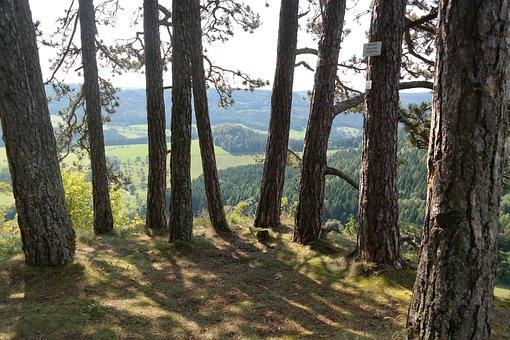 Viewpoint, Wenzel Stone, Swabian Alb, Pine, Rock