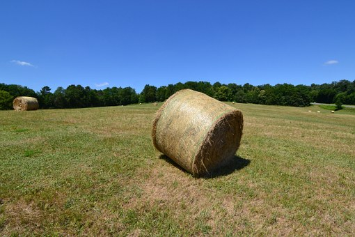 Bale Of Hay, Fever, Boots Hayfever, Fields, Summer