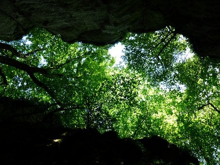 Canopy, Trees, Green, Foliage, Upward, Rock, Cleft Rock