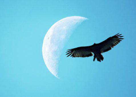 Quarter Moon, Bird Silhouette, Flight