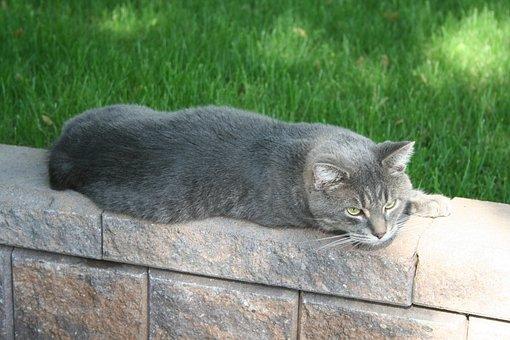 Cat, Grey, Pet, Animal, Domestic, Feline, House Cat