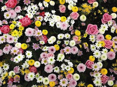 Flowers, Texture, Flower Carpet, Chrysanthemum, Rose