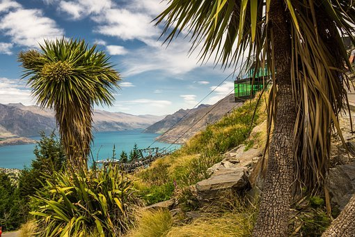 Queenstown, New Zealand, Cabbage Tree, Coast, Landscape