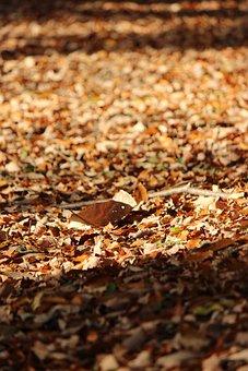 Fukushima, Fallen Leaves, Mount Shinobu, Autumn