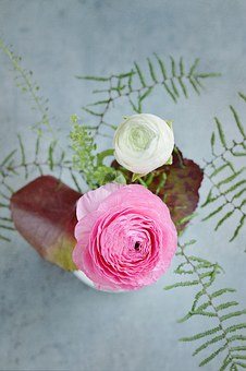 Flowers, Ranunculus, White, Pink, Leaves, Bouquet