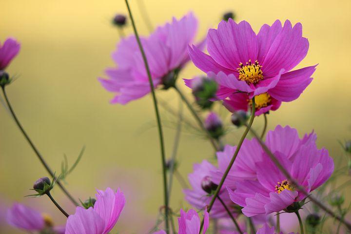 Flowers, Kawamata, Fukushima