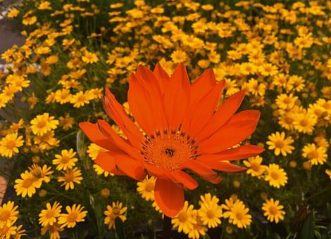 Flowers, Yellow, Orange, Amber, Red, Leaf, Green