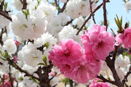 Hanamomo Park, Iizaka, Iizaka Hot Spring, Fukushima