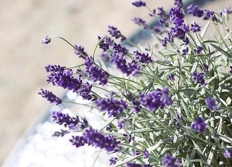 Lavender, Flower, Nature, Romanticism, Decoration