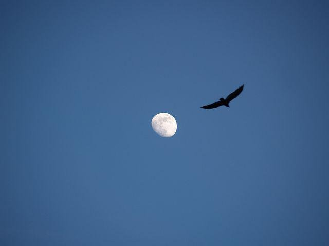 Moon, Bird, Landscape, Lky, Night, Silhouette, Wings