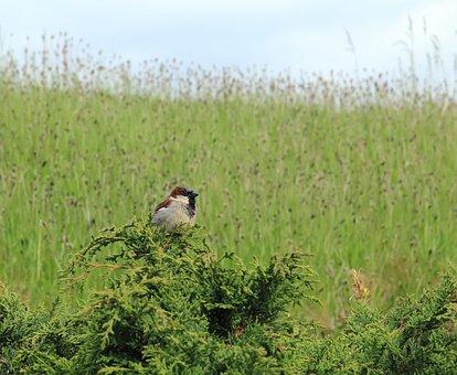 Chickadee, Bird, Nature, Animal, Wildlife, Outdoors
