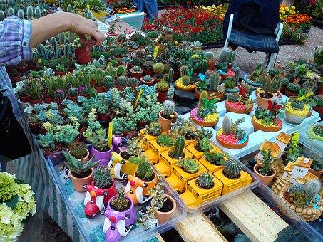 Cactus, Plant, Succulent, Mexican, Needle, Vegetation