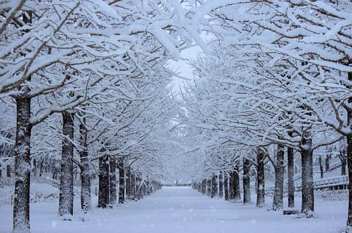 Azuma Sports Park, Ginkgo Trees, Snow, Winter