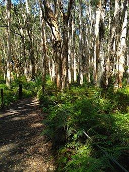 Centennial Park, Sydney, Woods, Path