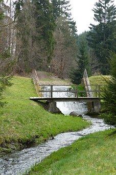 Forest, Nature, Tree, Water, Bach, Creek, Güntersberge
