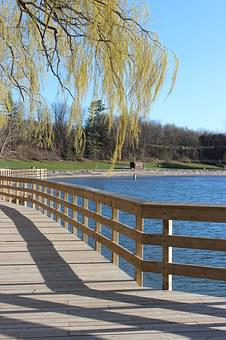 Lake, Water, Tree, Branches, Shadow, Board Walk, Park