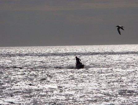 Ocean, Wave, Breeze, Jet, Ski, Sport, Bird, Nature
